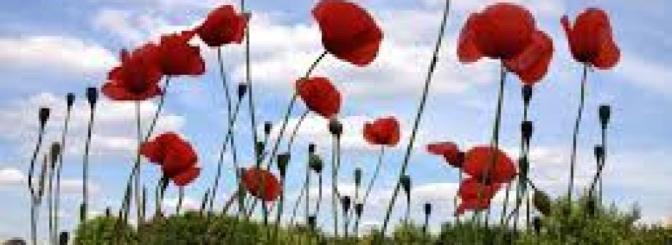 HYMN FOR ANZAC DAY – Shirley Murray