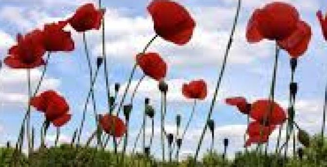 HYMN FOR ANZAC DAY – Shirley Murray