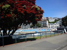 2011 12 28 Wellington waterfront (37)