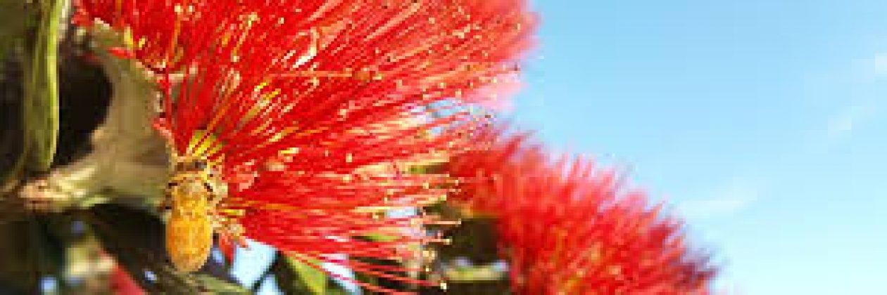 Progressive Christianity Aotearoa